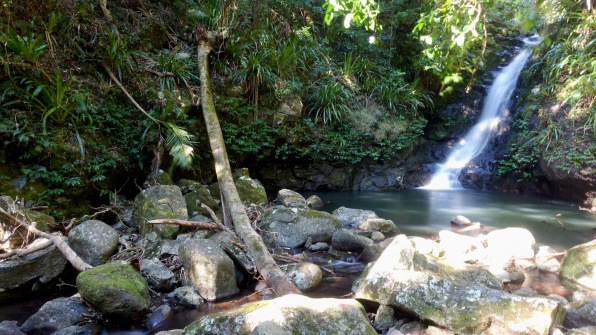 Goorinya Falls, on the Coomera Circuit (Lamington National Park)