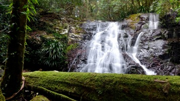 Kagoonya Falls on the Coomera Circuit track (Lamington National Park)