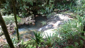 Small pool on the Coomera River
