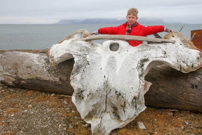 Remains of a whale skull at Isfjord, a whaling base until the 1650s