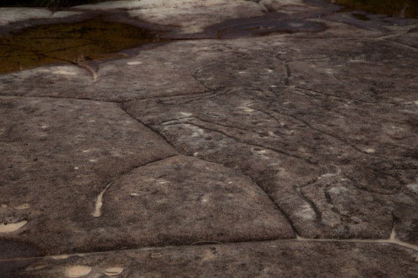 Aboriginal engravings on the Basin Track