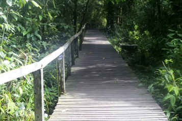 Main boardwalk to the Mulu caves