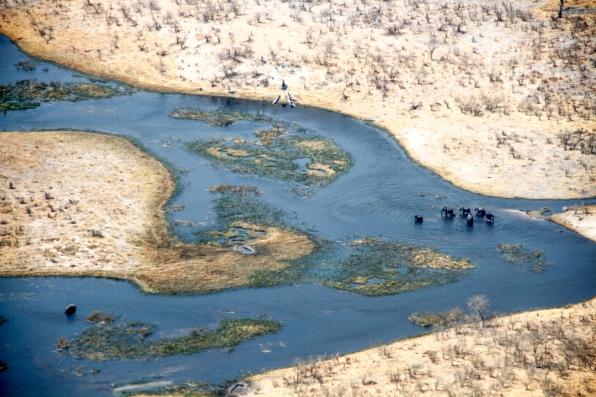 Elephants crossing the Savuti Channel