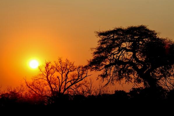 Sunrise behind Linyanti Camp