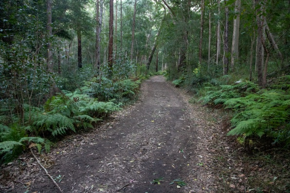 Main trail at Mount Barney