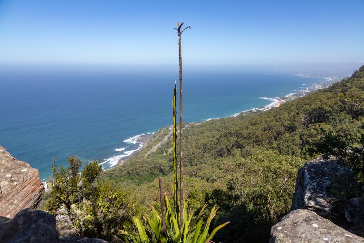 Illawarra Escarpment Track
